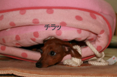 shinf-momiji3.jpg