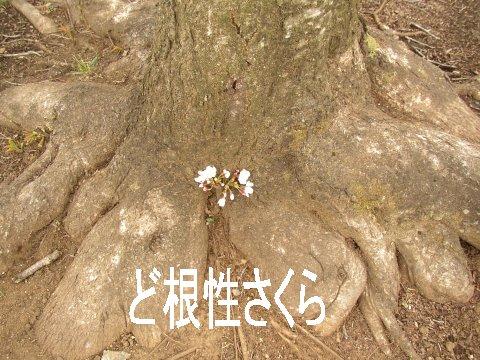 sora-13-sanpo2.jpg