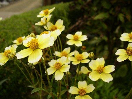 uinta-kosumosu.jpg