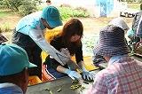 ベルトコンベアを流れる枝豆の選別