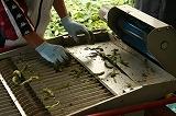 ベルトコンベアに流れる直前の枝豆アップ