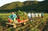 朝の枝豆収穫 上城寺の風景