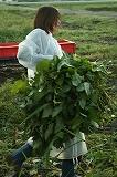 枝豆を運ぶ④