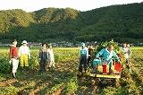 トラクターに枝豆を積む③