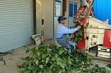 選別機に枝豆をかける