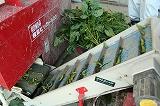 コンベアーを流れる枝豆