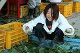 選別機横で枝豆の葉を片付ける参加者
