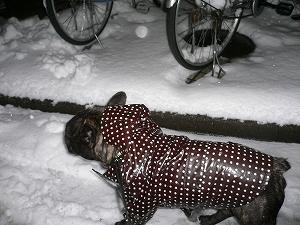 snownight