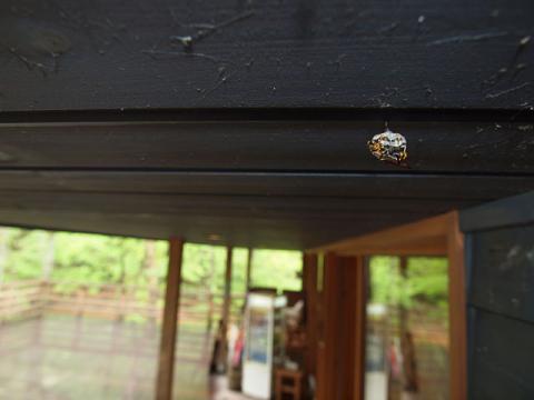 VCハチの巣