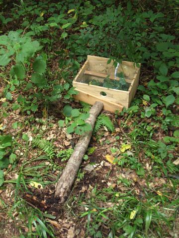 倒されたハチの巣