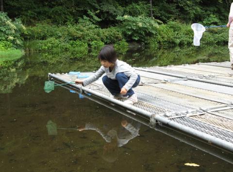水中の虫を捕る