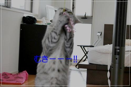 20100719-141825-002.jpg