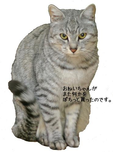 20110126-233527-003.jpg