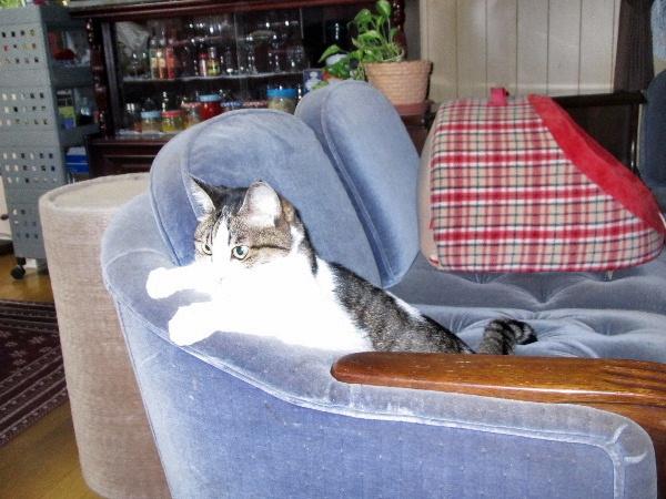 ソファーで