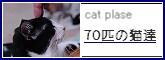 70cats-bana1.jpg