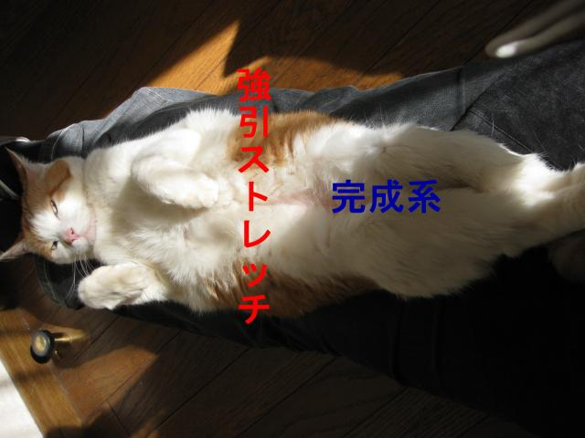 IMG_0010_convert_20090503155200.jpg
