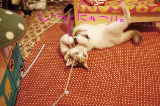 2010_0804_01.jpg