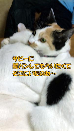 100327-09.jpg