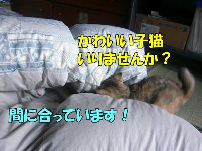 100629-01.jpg