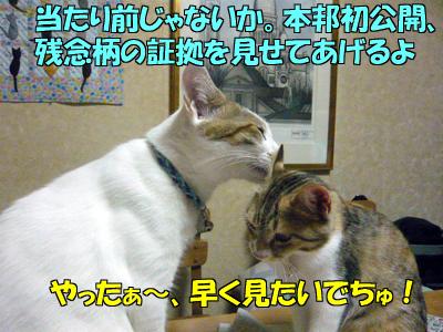 100815-04.jpg
