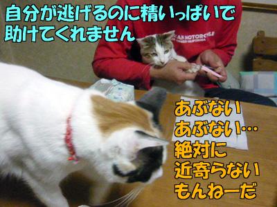 110301-09.jpg