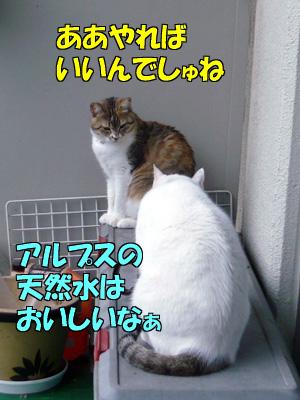 110512-08.jpg