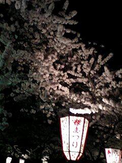合浦の夜桜