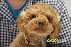 CHOCO.jpg
