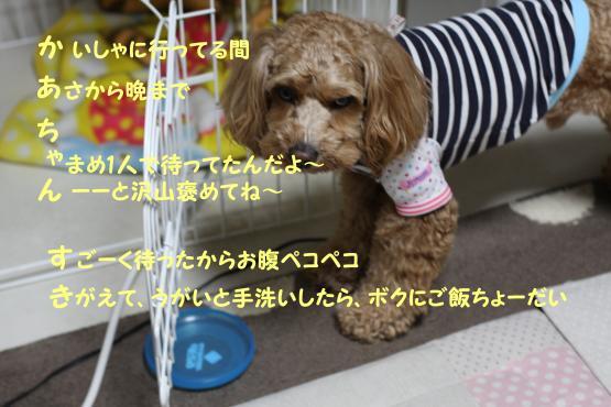 IMG_7927-1.jpg