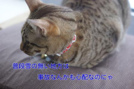 11_20100310214005.jpg