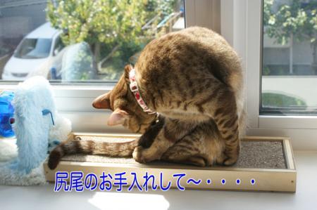 11_20100920092138.jpg