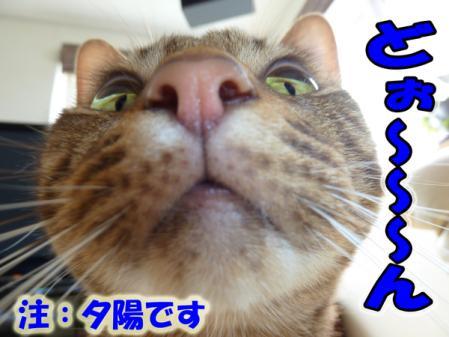 11_20101014082237.jpg