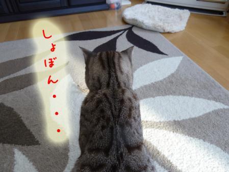 11_20110120100322.jpg