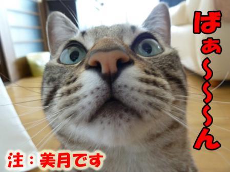 12_20101014082237.jpg