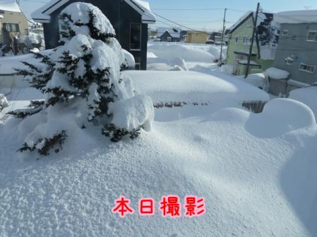 12_20110114142011.jpg