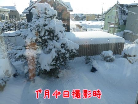13_20110114142010.jpg