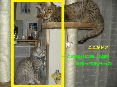 1_20100211145920.jpg
