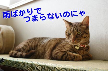 1_20100712111450.jpg