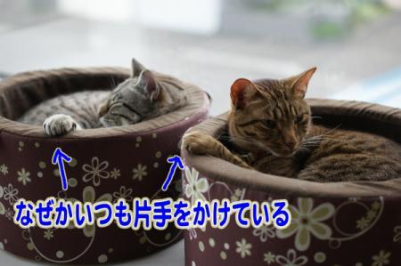 1_20100726225134.jpg