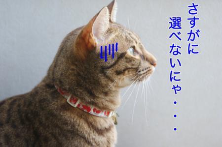 1_20100827004843.jpg