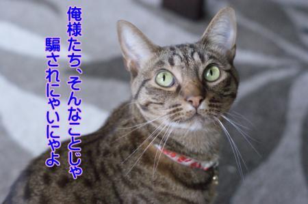 1_20101219142502.jpg