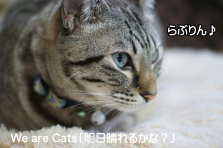 1_20101221095321.jpg