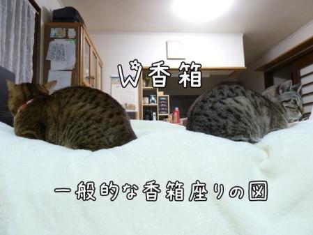 1_20101223213430.jpg