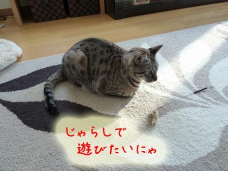 1_20110120100500.jpg