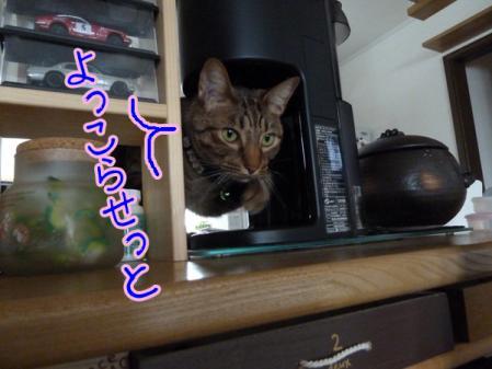 1_20110201130536.jpg