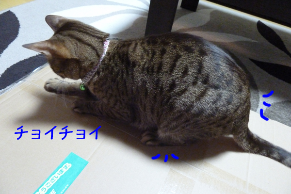 1_20110320094824.jpg