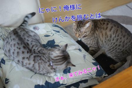2_20100307084034.jpg