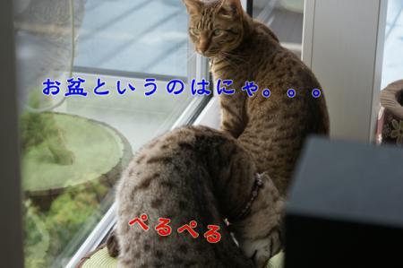 2_20100815004829.jpg