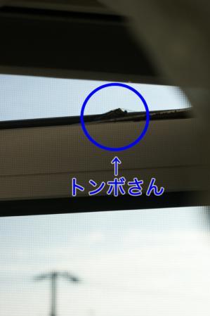 2_20100822162713.jpg
