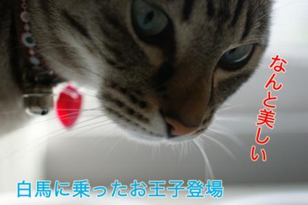 2_20100824082443.jpg
